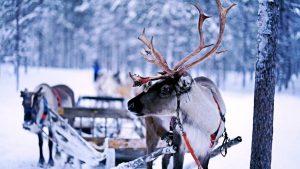 Christmas reindeer walker